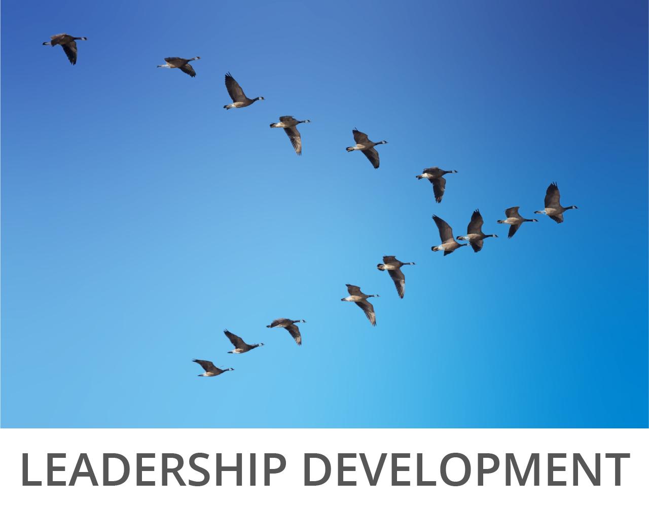 leadership development aoidos leadership
